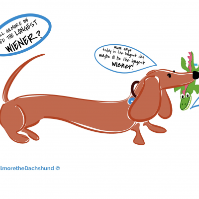 "WILL GILMORE BE CROWNED THE ""LONGEST DACHSHUND""? mum says today is the #thelongestdayoftheyear maybe it's good luck!"