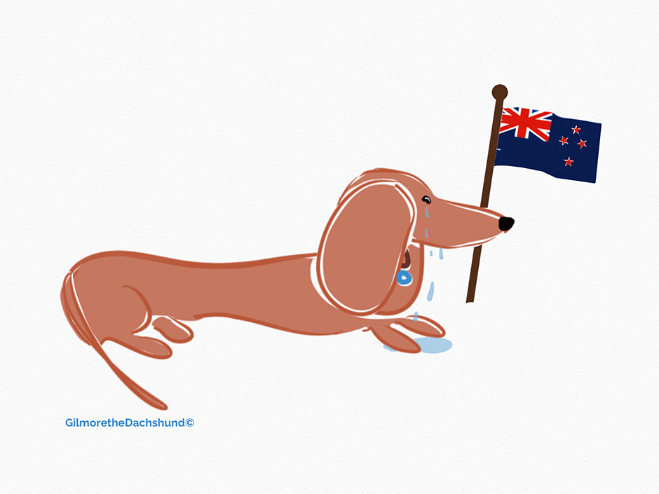 #Prayersforchristchurch Dachshund drawings