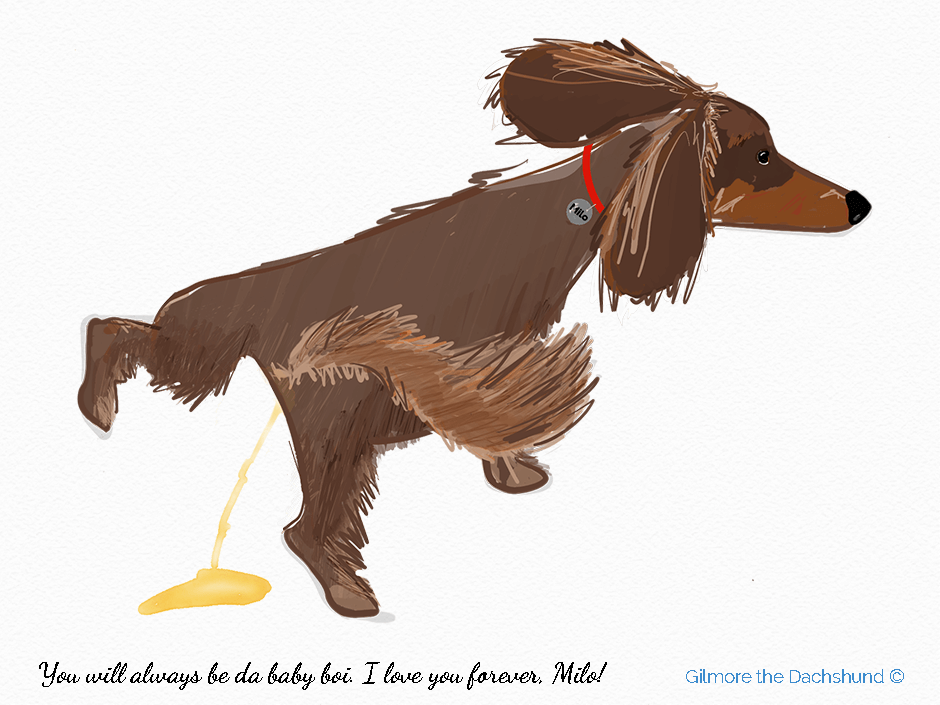 Drawing of a long haired dachshund urinating