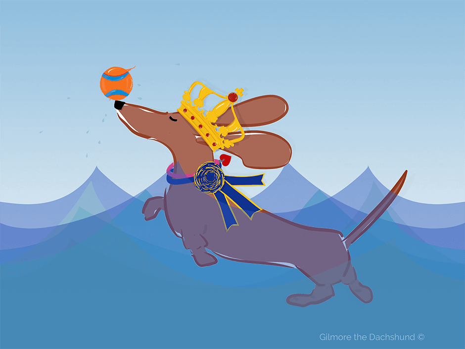 Gilmore the Dachshund © drawing of a beautiful smooth red standard dachshund swimming in a pool with her favorite orange ball