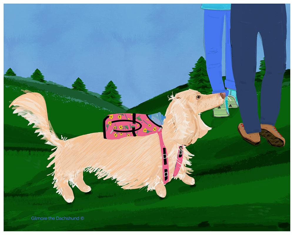 Gilmore the Dachshund © Custom portrait of Chablis