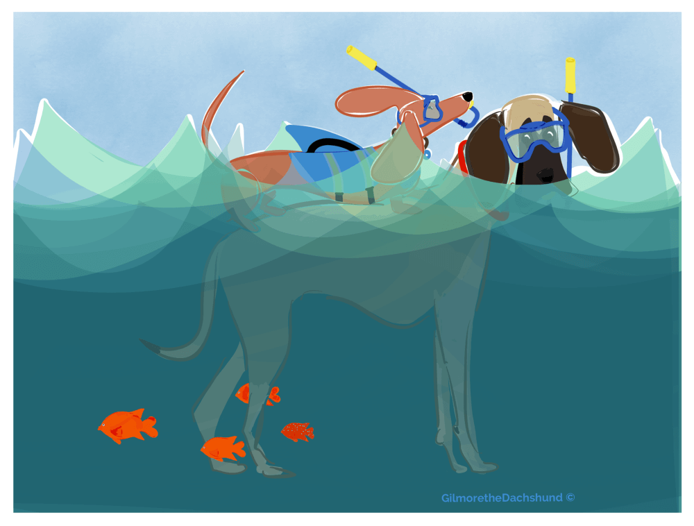 Gilmore and the great dane snorkeling