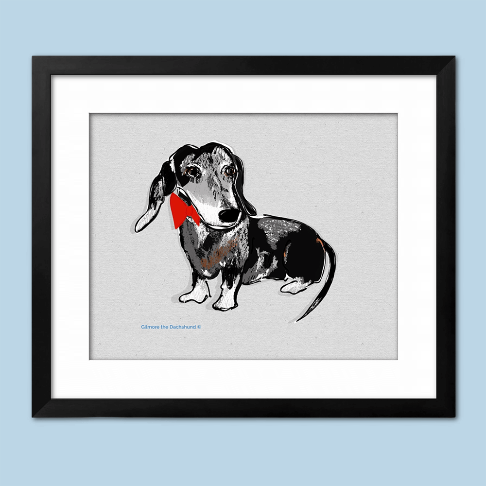sweet drawing of a senior dachshund